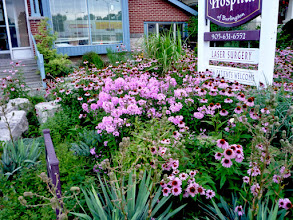 Photo: Purple Coneflowers, Summer Phlox and Yucca have long seasons of interest.