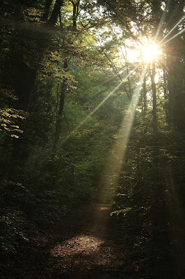 Dentro il bosco di Nicola0570