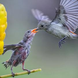 by Husada Loy - Animals Birds