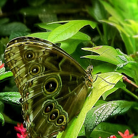 Butterfly by Sue Green - Nature Up Close Other Natural Objects ( amnh, high quality, in focus, insects, ny,  )