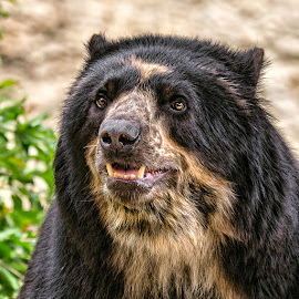 by Judy Rosanno - Animals Other Mammals ( spring, march 2018, san antonio zoo,  )
