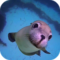 Sea Life HD Video Wallpaper icon