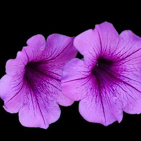 Purple Flowers on Black by Al Judge - Nature Up Close Flowers - 2011-2013 ( hillside, fall, arizona, sedona, flowers )