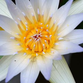 by Souvik Nandi - Nature Up Close Flowers - 2011-2013