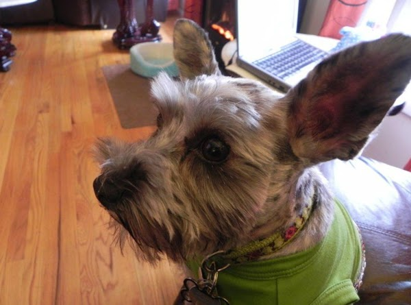 Tibby is also a part time counselor and is all ears. She is an...
