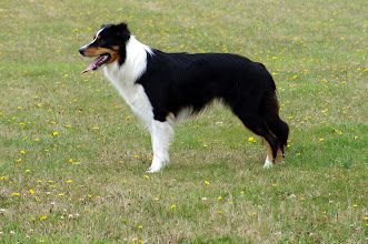 Photo: Armati's Dynamic Dog with a mission (Sem is helaas in oktober 2009 overleden)