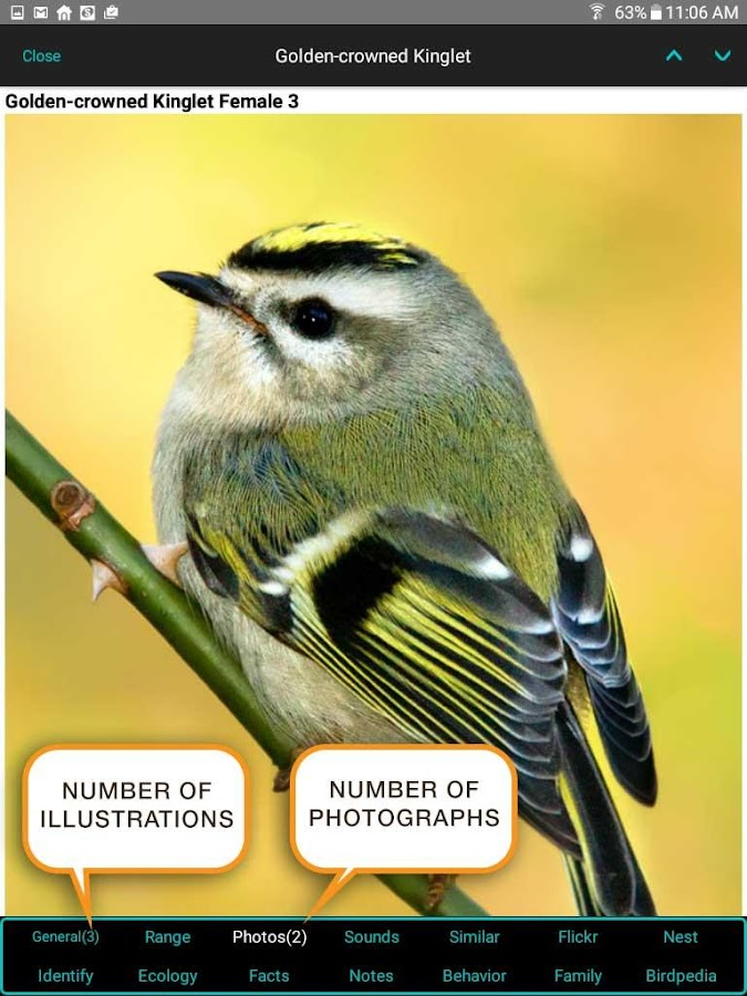iBird Lite Free Guide to Birds- screenshot