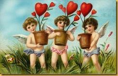 cupids heart plants