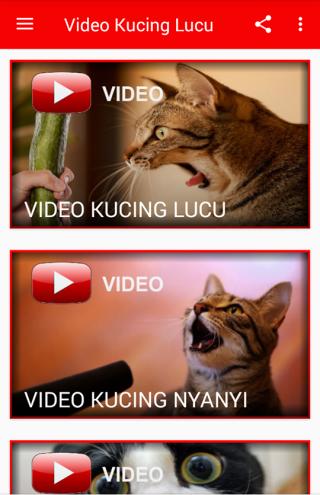 Download Video Kucing Lucu Ngakak Abis Google Play Softwares