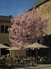 Photo: Frühling an der Porta Nigra