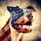 Pitbull Wallpaper icon