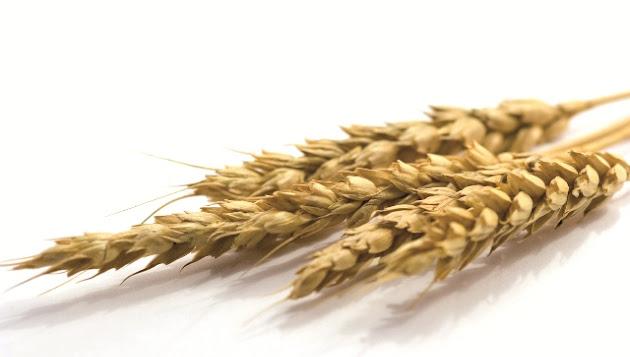 Bundesverband der Agrargewerblichen Wirtschaft