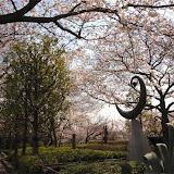 調布お花見マップ;桜堤通り(京王多摩川駅から染地)の桜写真