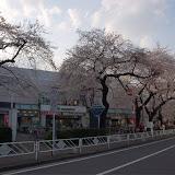 調布お花見マップ;調布ヶ丘のマルエツ付近の桜写真