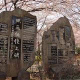 調布お花見マップ;多摩川第五児童遊園の桜写真