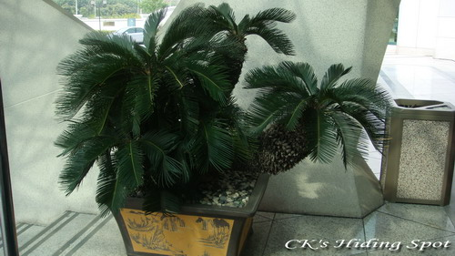 laksa plant. This dick plant is located at
