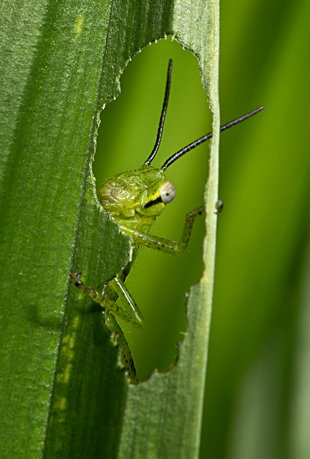 Hmm......... I'm Hunger..... by Oko Setiaboedi - Animals Insects & Spiders
