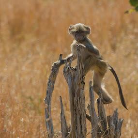 a flower for you by Fanie Weldhagen - Animals Other Mammals