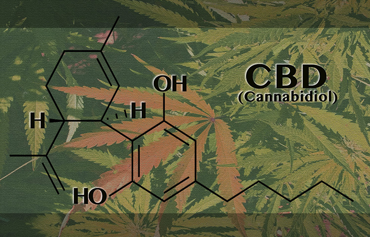 CBD - the miracle molecule