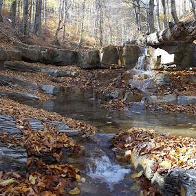 Есен by Georgi Kolev - Landscapes Forests ( есен., слънце., гора., вода., скали., листа. )
