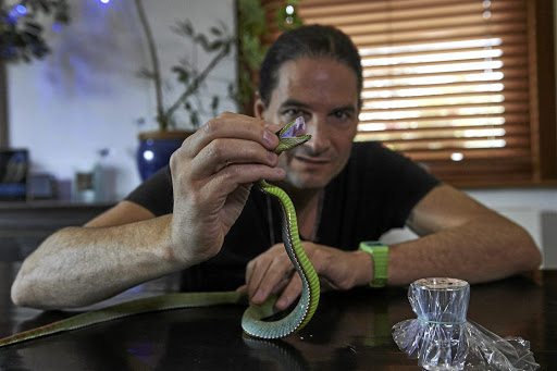 FANGS FOR YOUR HELP Steve Ludwin holds a Pope's Pit Viper after extracting its venom at his flat in Kennington, south London. For nearly 30 years Ludwin has been injecting himself with snake venom, a hobby that almost cost him his lifePicture Niklas Halle'n/AFP