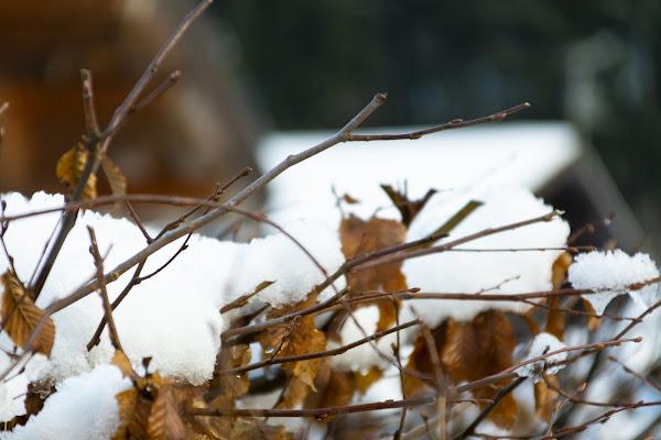 Sotto la neve, pane di dadoo