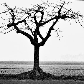 a lonely tree by Jayanta Roy - Artistic Objects Other Objects ( tree, black and white, fine arts )