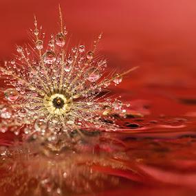 I wanna dance all night long.... by Citra Hernadi - Nature Up Close Water