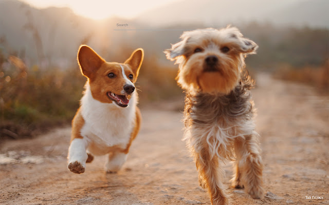 Dogs FullHD Wallparers