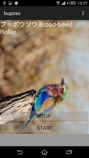 鳥鳴き声ブッポウソウ