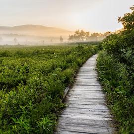 Through the Morning by Kevin Frick - Landscapes Travel ( mountians, sunrise, west virginia, boardwalk, fog )