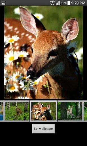 Deer  HD Wallpapers 1.2 screenshots 4