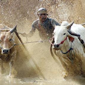 Sang penembus lumpur by Gery Arsuma - News & Events Sports