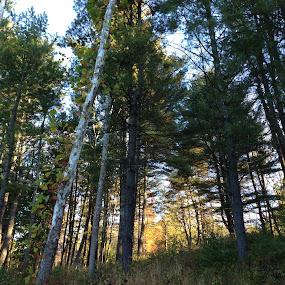 Trees at Ashokan by Eric Eldritch - Landscapes Forests ( autumn, fall, trees, forest, ashokan ny )
