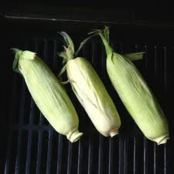 Re shuck carefully. You want to make sure the corn is covered with shuck...