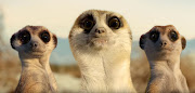 Three meerkats are featured in the banned Toyota Hilux TV advert.