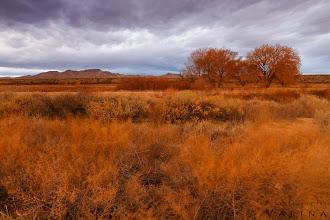 Photo: Bosque del Apache Wildlife Preserve, New Mexico