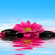 Download Shiny Pink Flower LWP For PC Windows and Mac