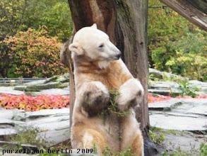 Photo: Knut versucht, Gianna mit der Pflanze zu beeindrucken ;-)