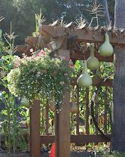 Photo: I love this idea! wanna grow gourds on our deck too