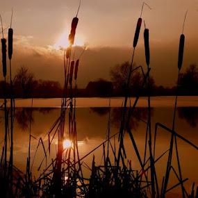sunset by Jana Černošková - Landscapes Sunsets & Sunrises ( sunset, pond,  )