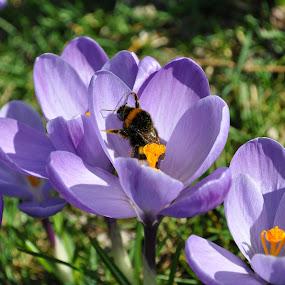 Spring... :-)  by Ana Wisniewska - Flowers Flowers in the Wild