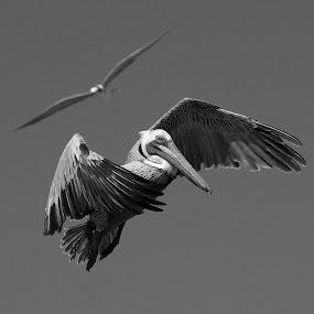 by Steven Aicinena - Black & White Animals (  )