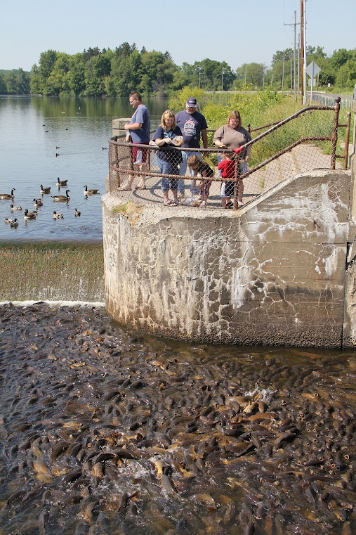 Linesville, onde os patos caminham sobre peixes