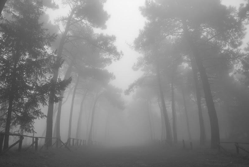 Come quando la nebbia si dissipa.... di gadani's idea