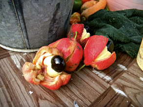 Photo: Ackee, also in the backyard of No Limit.