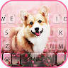 com.ikeyboard.theme.cute.corgi
