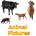 Animals Name and Pictures for Kids icon