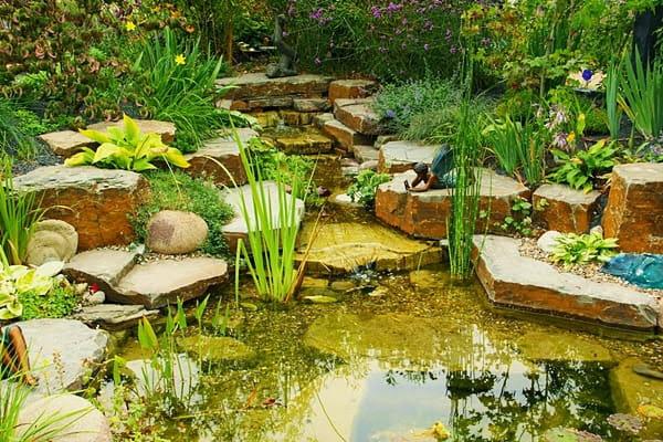 ý tưởng cho ao nước Thiết Kế Nước Cho Sân Vườn