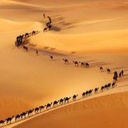 Сонник верблюжий караван